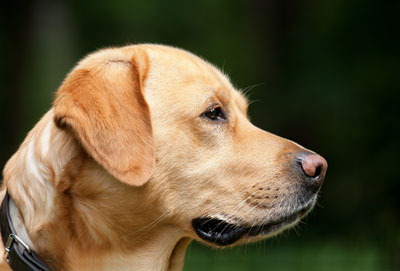 Healthy dogs take fish oils with the right epa balance