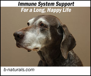 Berte's immune blend benefits older dogs too