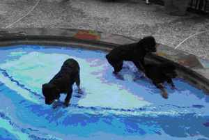pool puppies