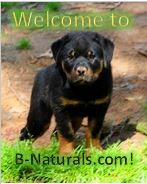 B-Naturals Pet of the Month